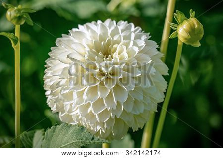 Detailed Close Up Of A Beautiful White
