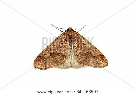 Butterfly Nocturnal Orange Moth Isolated On White Background, Top View