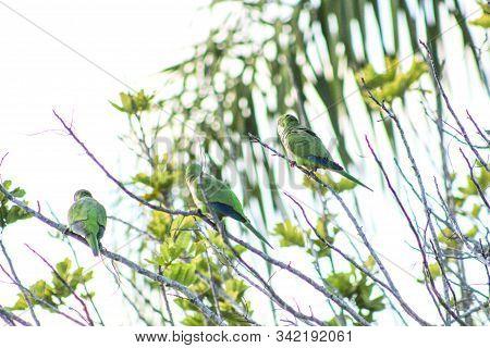 Green Tropical Bird In Florida