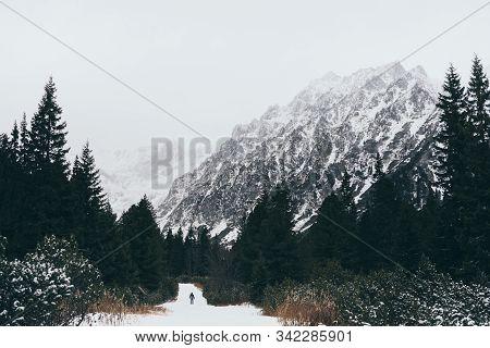 Small Human Figure Walking Towards High Tatra Mountains Through Pine Tree Forest In Winter, Slovakia