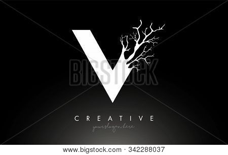 Letter V Design Logo With Creative Tree Branch. V Letter Tree Icon Logo  Vector Illustration.