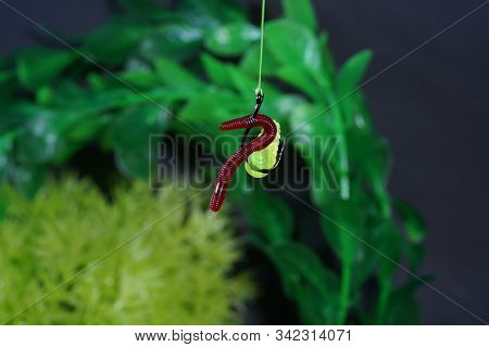 Plastic Coarse Bait For Fishing For Ungulates Such As Carp Or Roach