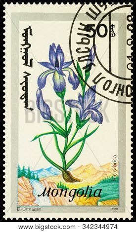 Moscow, Russia - December 29, 2019: Stamp Printed In Mongolia Shows Siberian Iris Or Siberian Flag (