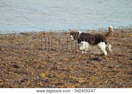 Dog Playing And Having Fun At The Beach