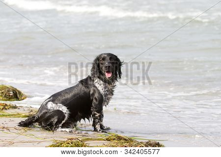 Dog Playing In The Water And Having Fun In Denmark