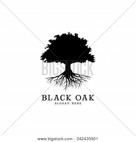 Black Oak Tree Logo And Roots Design Illustration