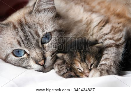 Mother cat and her newborn kitten