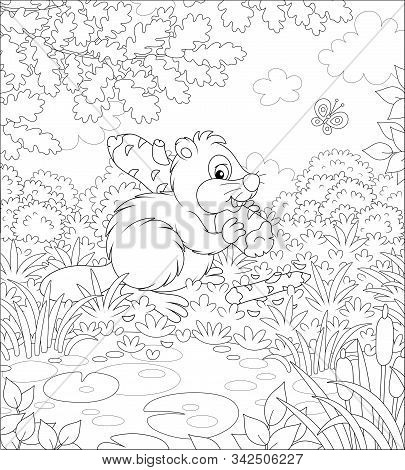 Furry Beaver With A Big Flat Tail And Large Teeth Carrying A Small Gnawed Log By A Small Lake In A F