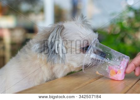 Dog So Cute Eat A Ice Cream Feed Pet Owner