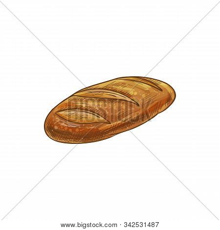 Long Loaf Bread Isolated Sketch. Vector Long Loaf, Baked Pastry Baguette