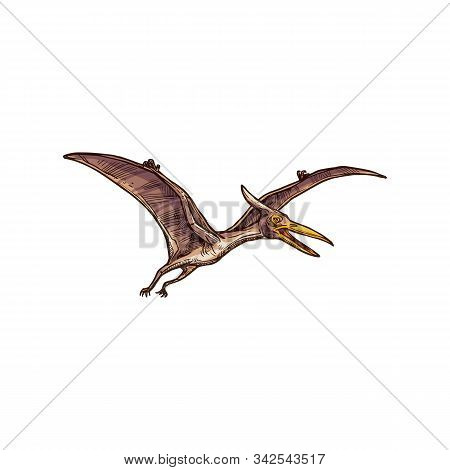 Pterodactyl Isolated Flying Pteranodon Dinosaur Bird Sketch. Vector Prehistoric Pterosaur Dino Anima