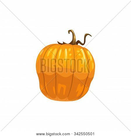 Pumpkin Or Squash Isolated Vegetable. Vector Orange Autumn Gourd, Thanksgiving Or Halloween Mascot