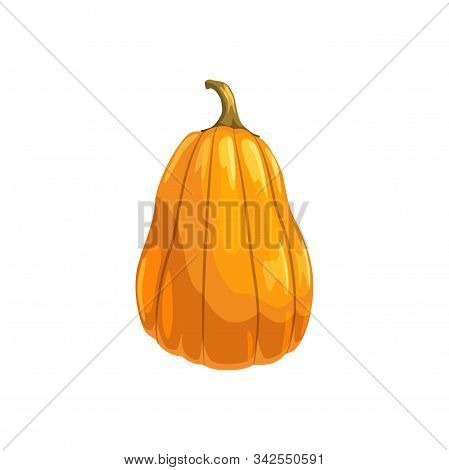 Orange Pumpkin With Stem Isolated Fresh Vegetable. Vector Natural Food, Organic Squash Or Gourd