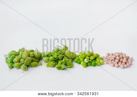 Raw Green Fresh Chickpeas And Dried Chickpeas. Heap Of Legume Chickpea Background. Top View. Free Sp
