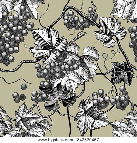 Seamless pattern background of wine grapes with leaves and branches. Vintage engraving stylized drawing.