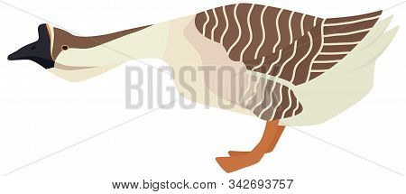 Farming Today African Goose Vector Illustration Of A Breed Of Domestic Goose Isolated Object Set