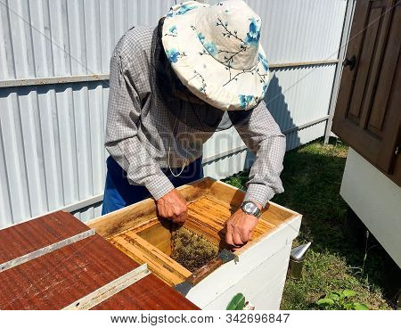Winged Bee Slowly Flies To Beekeeper Collect Nectar On Private Apiary From Live Flowers. Apiary Cons