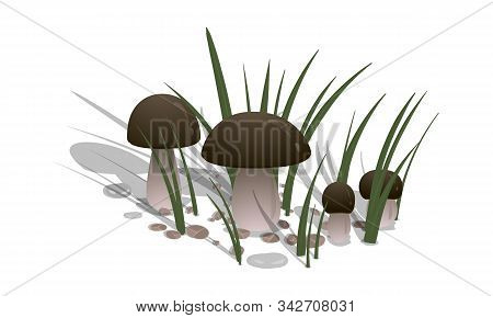 Ceps With Grass And Stones On A White Background. Vector Illustration