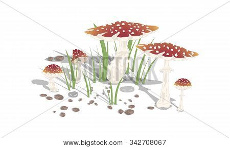 Amanita Mushrooms With Grass And Stones On A White Background. Vector Illustration