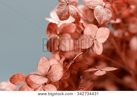 Dry Hydrangea Flowers Close-up On A Gray Background To Illustrate Poetry, Abstractions, Associations