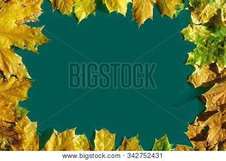 Mockup Frame From Colorful Autumn Maple Leaves On Color Trend Background.