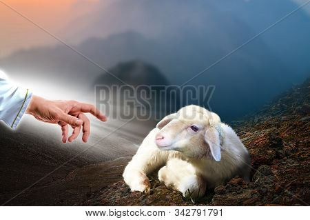 Jesus Hand Reaching Out To A Lost Sheep. Biblical Theme Concept.
