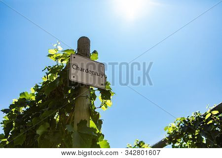 Chardonnay Wine Grape Variety Sign On Wooden Pole Against Blue Sky During Sunny Day, Vineyard Variet