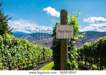 Pinot Gris Wine Grape Variety Sign On Wooden Vertical End Post, Vineyard Varieties Signs, Okanagan V