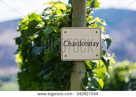 Chardonnay Wine Grape Variety Sign On Wooden Pole Selective Focus, Vineyard Varieties Signs, Okanaga