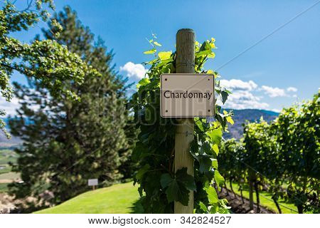Chardonnay Wine Grape Variety Sign On Wooden Vertical End Post, Canadian Vineyard Field Background,