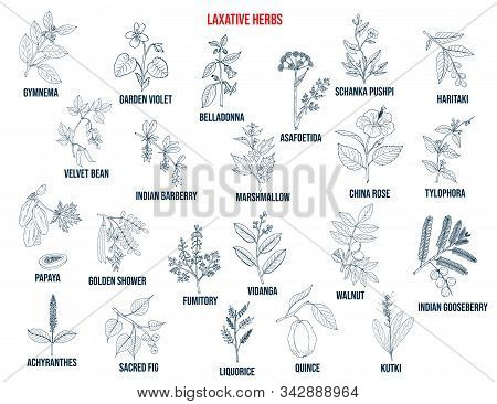 Best Laxative Herbs. Hand Drawn Vector Set Of Medicinal Plants