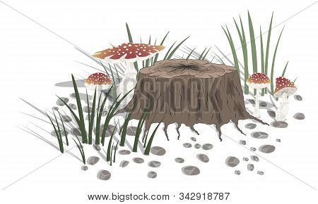 Amanita Mushrooms Near Hemp With Grass And Stones On A White Background. Vector Illustration
