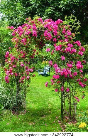 A lawn chair on the lawn in a rose garden.