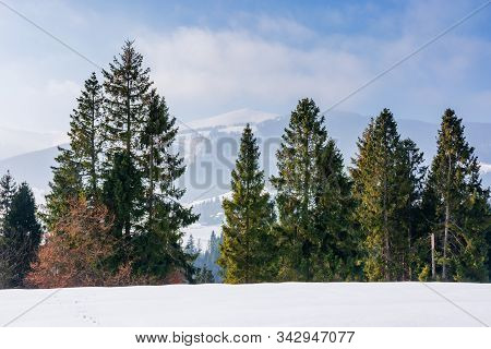 Spruce Forest On The Snow Covered Mountain Meadow. Beautiful Winter Scenery With The Distant Ridge.