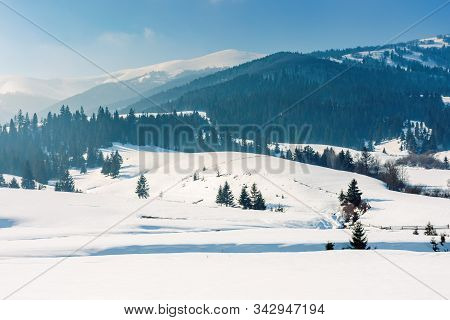 Mountainous Countryside In Wintertime. Beautiful Rural Landscape On A Bright Sunny Day. Spruce Fores