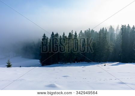 Winter Landscape At Sunrise. Spruce Forest On A Snow Covered Hill In Fog. Sunny Weather With Blue Sk