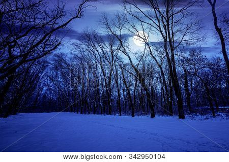 Winter Forest At Night. Trees In Full Moon Light