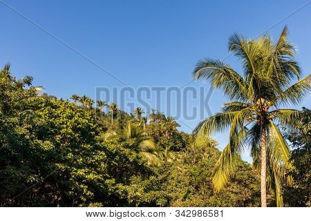 Beautiful Tropical Landscape With Palm Trees. Yelapa, Jalisco, Mexico.