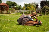Horse having a roll in the grass poster