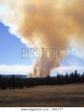 Forest Fire (vertical)