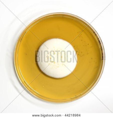 agar plate with microorganisms