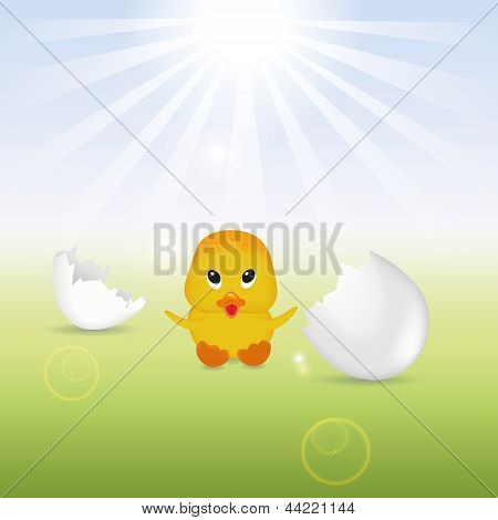 Cute Chick with Eggshells
