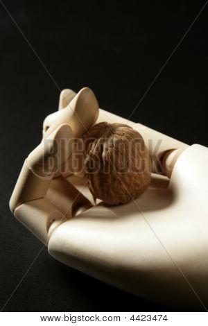 Mannequin Wooden Hand Holding One Walnut