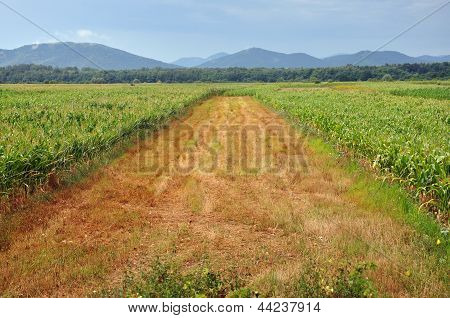 Arable agricultural field