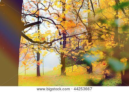Autumn fog park