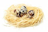 Quail eggs in nest isolated on white background poster