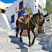 donkey on stairs of Santorini, traditional Greek life series poster