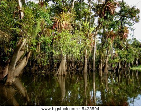 Wunderbaren tropischen Sumpf