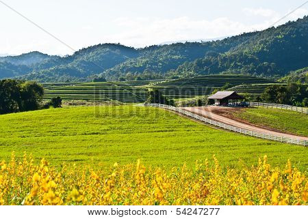 Yellow Flower Field View