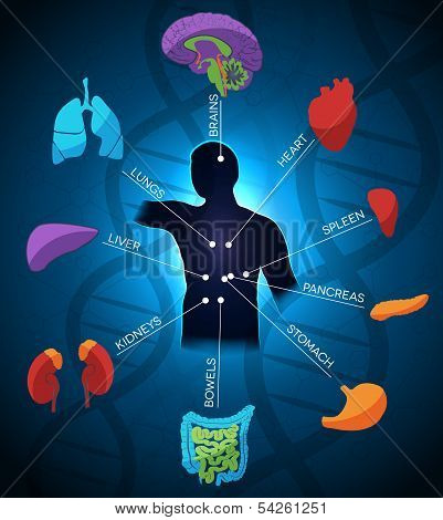 Human anatomy colorful and bright design DNA chain at the background. Beautiful deep blue color. poster